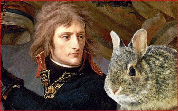 Napolyon'un tavşanlarla imtihanı #1