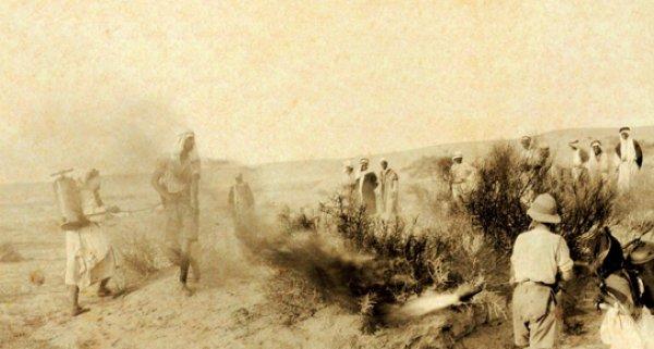 Osmanlı'nın çekirge istilasına karşı savaşı #1